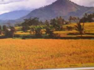 rambatan sumatra barat