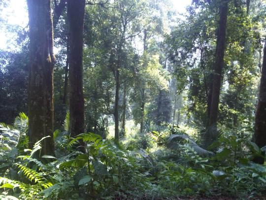 hutan taman gunung halimun salak