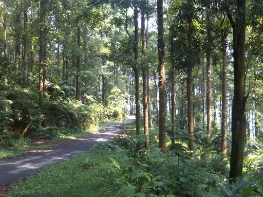 Hutan Taman Gunung Halimun