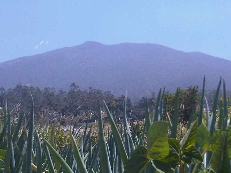 Kebun Percobaan Pasir Sarongg desa ciputri pacet cianjur